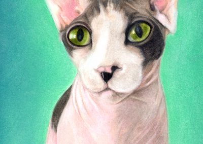 Magical Kitty - Pastel, Glitter pastel & Colored Pencil