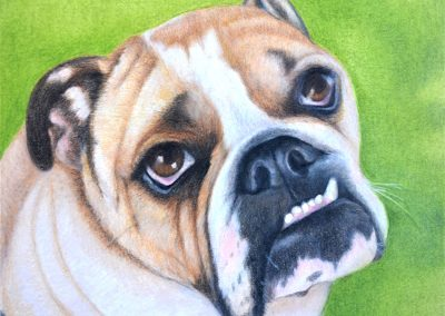 Rocco - Pastel & Colored Pencils