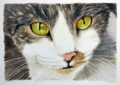 Suki - Colored Pencil